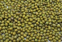 whole green mung beans used in kitchari